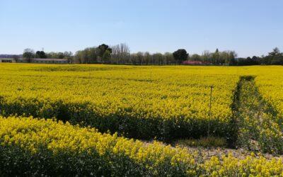 ¿Es posible reducir la huella de C por kilogramo de cosecha asociada a un cultivo de colza para biodiesel? Resultados de un ensayo en clima Mediterráneo semiárido