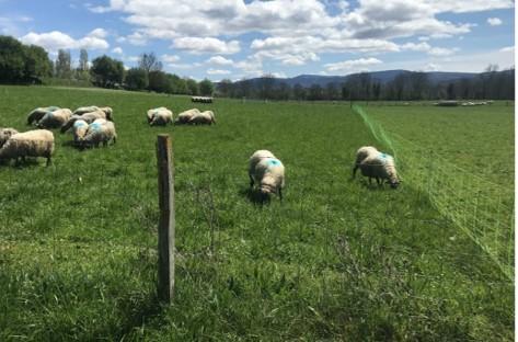 Ganadería sostenible: El pastoreo regenerativo rotacional como herramienta de mitigación al cambio climático